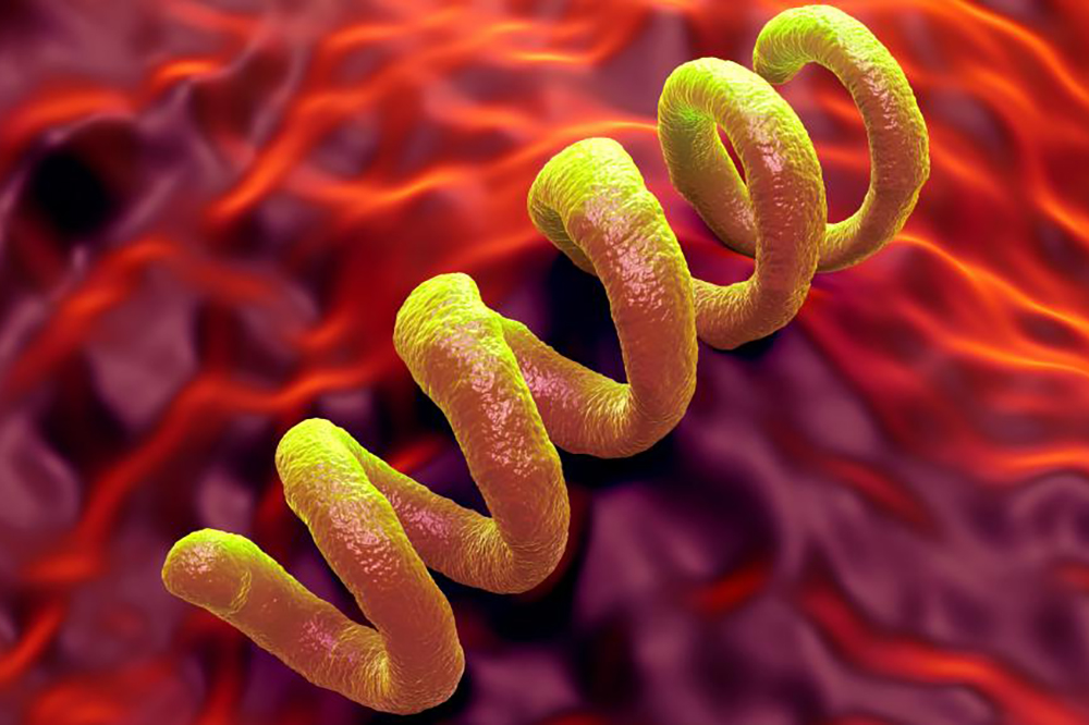 sifilis-simptomi-priznaki